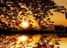 Puesta del sol en el agua entre el papel pintado del fondo de la naturaleza de las hojas Imagen de archivo libre de regalías