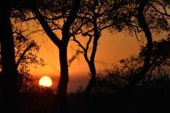 Puesta del sol en el arbusto Imagenes de archivo