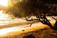 Puesta del sol en el beac y el árbol Imagen de archivo
