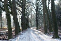 Puesta del sol en el bosque Imágenes de archivo libres de regalías