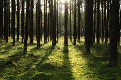 Puesta del sol en el bosque Fotos de archivo libres de regalías