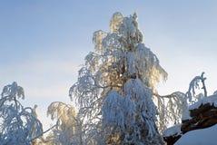 Puesta del sol en el bosque de la montaña del invierno Imagenes de archivo