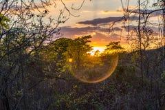 Puesta del sol en el bosque de los guayacanes foto de archivo