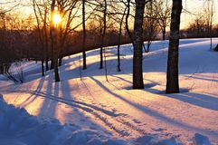 Puesta del sol en el bosque del invierno Fotos de archivo libres de regalías