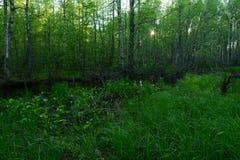 Puesta del sol en el bosque en los bancos del río en los matorrales del bosque de la vegetación salvaje Foto de archivo libre de regalías