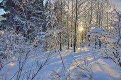 Puesta del sol en el bosque del invierno Imagen de archivo