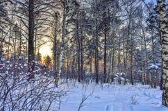 Puesta del sol en el bosque del invierno Fotografía de archivo