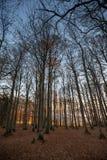 Puesta del sol en el bosque negro, Alemania Imagenes de archivo