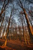 Puesta del sol en el bosque negro, Alemania Imagen de archivo libre de regalías