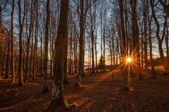 Puesta del sol en el bosque negro, Alemania Foto de archivo