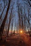 Puesta del sol en el bosque negro, Alemania Fotos de archivo