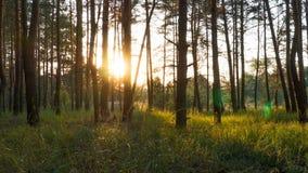 Puesta del sol en el bosque a través de los árboles Timelapse almacen de metraje de vídeo