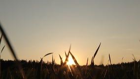 Puesta del sol en el campo almacen de video