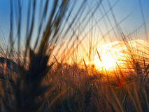 Puesta del sol en el campo Fotos de archivo libres de regalías