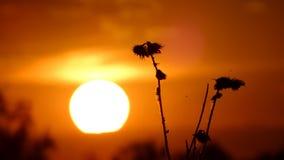 Puesta del sol en el campo Imagenes de archivo