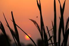 Puesta del sol en el campo fotografía de archivo