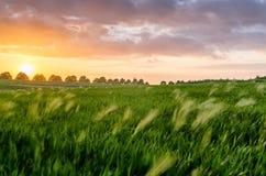 Puesta del sol en el campo foto de archivo libre de regalías