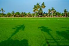 Puesta del sol en el campo del arroz en Tailandia imagen de archivo libre de regalías