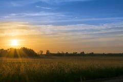 Puesta del sol en el campo del centeno Imagen de archivo libre de regalías