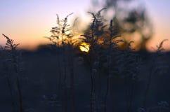 Puesta del sol en el campo Crepúsculo Fotos de archivo