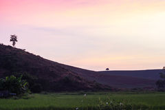 Puesta del sol en el campo del arroz Foto de archivo