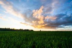 Puesta del sol en el campo del trigo foto de archivo