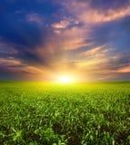 Puesta del sol en el campo verde del trigo, del cielo azul y del sol, nubes blancas. país de las maravillas Fotografía de archivo libre de regalías