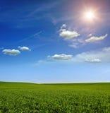 Puesta del sol en el campo verde del trigo, del cielo azul y del sol, nubes blancas. país de las maravillas Imagen de archivo