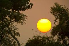 Puesta del sol en el centro del bosque Fotos de archivo