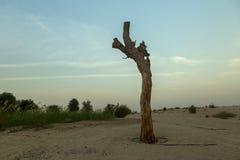 Puesta del sol en el desierto Imágenes de archivo libres de regalías