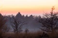 Puesta del sol en el Forrest Foto de archivo libre de regalías