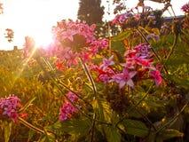Puesta del sol en el jardín fotografía de archivo
