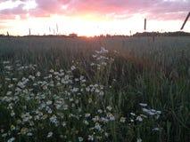 Puesta del sol en el lado del país Fotografía de archivo libre de regalías