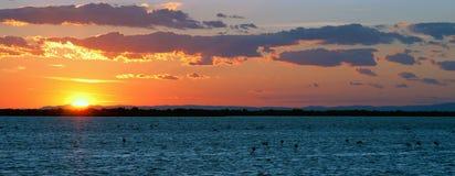 Puesta del sol en el lago con los flamencos Imagenes de archivo