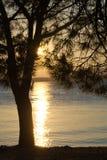 Puesta del sol en el mar El sol va abajo detrás de un árbol Imagenes de archivo