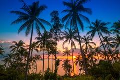 Puesta del sol en el mar y las palmas tropicales Fotografía de archivo libre de regalías