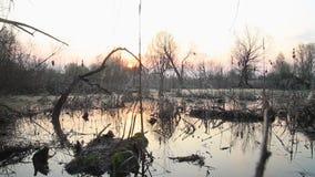 Puesta del sol en el pantano de la primavera almacen de metraje de vídeo