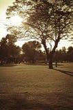 Puesta del sol en el parque Imágenes de archivo libres de regalías