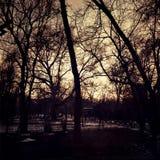 Puesta del sol en el parque Imagen de archivo libre de regalías
