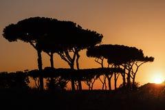 Puesta del sol en el parque de los acueductos Fotos de archivo libres de regalías