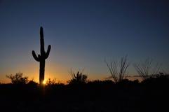 Puesta del sol en el parque nacional Arizona del Saguaro Foto de archivo libre de regalías