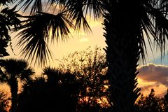 Puesta del sol en el pie Pierce, la Florida con la silueta de las palmeras que enmarcan la foto foto de archivo