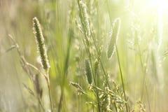 Puesta del sol en el prado Fotografía de archivo libre de regalías