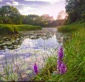 Puesta del sol en el remanso del río Fotografía de archivo
