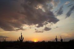 Puesta del sol en el Saguaro NP Foto de archivo libre de regalías