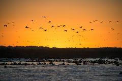 Puesta del sol en el tintóreo Island Fotos de archivo