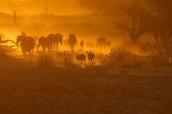 Puesta del sol en el waterhole de Okaukeujo, Namibia Foto de archivo