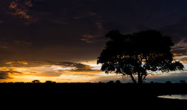 Puesta del sol en África Fotos de archivo libres de regalías