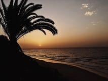 Puesta del sol en Fuertaventura, playa y palma imagen de archivo
