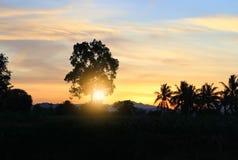 puesta del sol en hermoso colorido del cielo con el árbol de la silueta en arbolado Imágenes de archivo libres de regalías